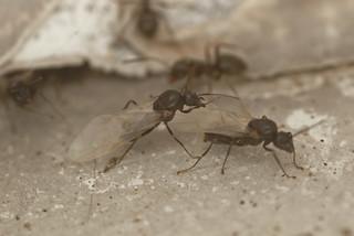 Ants EF7A5972