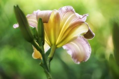 *** (pszcz9) Tags: przyroda nature natura kwiat flower zbliżenie closeup bokeh ogródbotaniczny botanicgarden beautifulearth sony a77