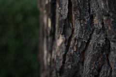 ante meridiem (cemguv) Tags: bokeh bokehlicious beyondbokeh outdoor canon tree texture wood