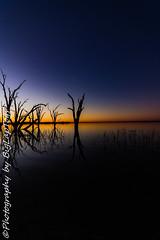 IMG_5498 (biglaptogs) Tags: barmera lakebonney riverland sa states sunsetsunrise