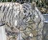 Panthera Tigris Tigris (will139) Tags: whitetiger pantheratigristigris bengaltiger tiger mammal exoticfelinerescuecenter efrc carnivore carnivora ruralindiana feline cat