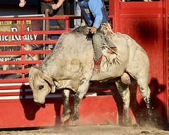 fullsizeoutput_a49 (kmbiando148) Tags: rodeo horses montana toughenough bulls riding summernight 8seconds west cowboys hats chaps spurs wranglers boots
