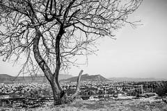 Old Tree (DanielDuron) Tags: old tree nature black white blackandwhite saltillo city nikon 5500 d5500 park monocromatic monochrome