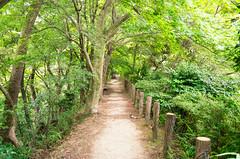Summer Path (moaan) Tags: kobe hyogo japan jp path green forest summer july trees leaves momiji japanesemaple silence quietude mtrokko leicax2