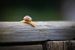 Big Drop (FuturePhotographyUAE) Tags: path wood snail nature slow blur shell garden outdoors brown animal