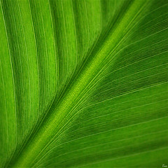 green (TeRo.A) Tags: abstractnature macro green vihreä luonto