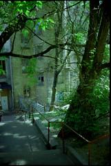 24ю1 (swan.mary) Tags: film эликон street home green 1stroll purple blue analog summer ukraine kiev