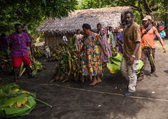 People bringing yams as gifts for a traditional wedding, Malampa Province, Ambrym island, Vanuatu (Eric Lafforgue) Tags: a0011523 abundance agriculture ambrym ambrymisland basicfood buildingexterior builtstructure celebration colourimage culltures day developingcountries exterior fanla food freshness gifts giving groupofpeople home horizontal indigenousculture kastom newhebrides nivanuatu nonurbanscene outdoors photography rootvegetable rural southpacific taro tourism traveldestinations tribal tribe tuber vanuatu vegetable village wedding weddingceremony wood yam malampaprovince vut