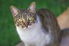 Luque (ruimc77) Tags: nikon d810 tamron sp 70200mm f28 di vc usd luque gato cat custodia custódia pe pernmabuco brasil brazil nordeste tamronsp70200mmf28divcusd nikond810 bresil brèsil 巴西 ブラジル البرازيل ברזיל brazilië brasilien бразилия brasile 브라질