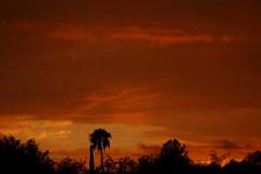 Sunset July 12, 2017 #01 (Az Skies Photography) Tags: sun set sunset dusk twilight nightfall sky skyline skyscape skycandy clouds cloud red orange yellow gold golden salmon black july 12 2017 july122017 71217 7122017 canon eos 80d canoneos80d eos80d