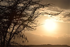 Freedom in the Wild (The Spirit of the World) Tags: acacia tree sunset landscape horizon silouettes sun light goldenhour lakenakuru kenya gamereserve gamedrive eastafrica africa clouds hills