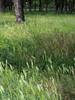 20170501-0226 (www.cjo.info) Tags: balkanpeninsular belgrade beograd europe formeryugoslavia novibeograd parkprijateljstva pentax pentaxk pentaxk3ii smcpentaxdalimited70mmf24 serbia southeasterneurope srbija autofocus bayonet digital flora garden park plant tree београд новибеоград паркпријатељства србија