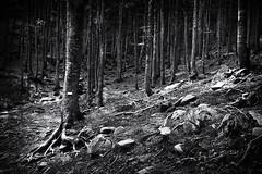 Nel bosco..... (gramilu) Tags: monochrome wood nature tree no person park bosco sentiero