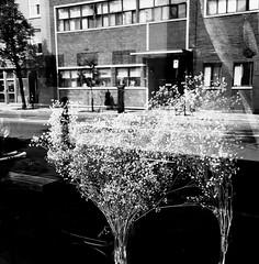 Elle marche dos à la beauté du monde... (woltarise) Tags: montréal outremont femme hassidique communauté reflet bouquet sêchées fleurs restaurant vanhorne rue streetwise