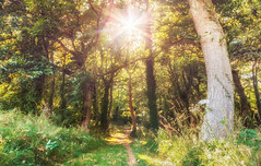 Foret Mao (Thaurin Geoffrey Photographie) Tags: canon france bretagne nature paysage landscape foret ballade sun soleil green forest ngc