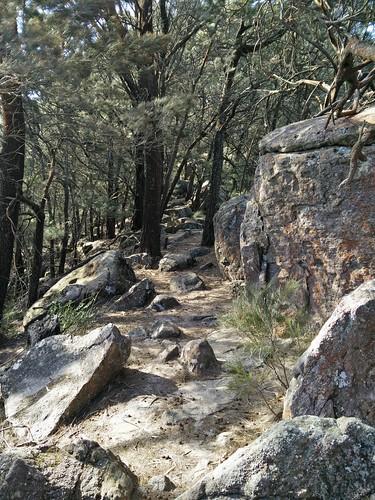 Mount Kembla Summit Track