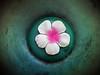 4_p_n_g (maximorgana) Tags: pink green pg fake fabric flower trashbit o