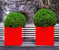 Decor with plants (chrisk8800) Tags: decoration plants boxes barcelona chrisk8800 lines reflections abstract