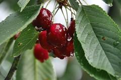 Lecker (Karabelso) Tags: fruits leaves red green water trops frucht laub rot grün wassertropfen panasonic lumix gx7
