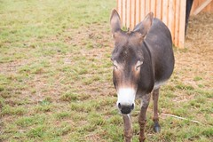 GoUrban_170727_Farm_118