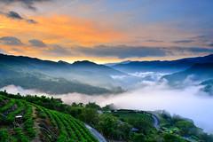 南山雲海(DSC_1366) (nans0410(busy)) Tags: taiwan newtaipeicity pinglin cloud fog sunrise dawn sky teagarden 台灣 新北市 坪林區 南山寺 茶園 晨曦 日出 雲海 樟空子路 仙公廟