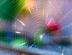 Webbing in colour (Wendy Oor) Tags: spider web nature insect colourful outside red green yellow blue summer pattern