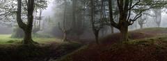 Otzarreta III (joseba71) Tags: gorbea hayedo naturaleza niebla otzarreta paisaje gorbeia fog rain luvia panorama parquenatural paisvasco euskadi españa nature landscape panoramica natural park fujifilm fuji xt2 xf1655