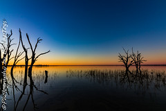 IMG_5442 (biglaptogs) Tags: barmera lakebonney riverland sa states sunsetsunrise