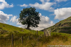 Lone Tree (SarahO44) Tags: 6d blea canon clouds cumbria district england fence gate green kingdom lake landscape lone nature sky tree uk united littlelangdale unitedkingdom gb national park