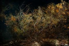 Untitled (The Antic Staatsoper) Tags: nature burning bushes art darkness photography desert night usa