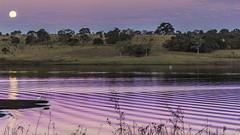 Moon and herons on the dusk (Rapha777) Tags: céu cor diferente landscape braçoderio purple thebanksriver