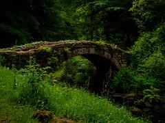 Old Stone Bridge (Draycott Photography) Tags: draycott photography em10 northumberland omd olympus wooler cragside woods bridge moss grass stream draycottphotography rothbury england unitedkingdom gb