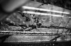 放埒 (dissipated) (Dinasty_Oomae) Tags: petri18 retri ペトリ ペトリ18 白黒写真 白黒 monochrome blackandwhite blackwhite bw outdoor 千葉県 船橋市 chiba funabashi 柵 fence ワイヤ wire