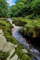 strid (scottprice16) Tags: england yorkshire riverwharfe wharfedale boltonabbey dukeofdevonshire estate limestone narrow gorge summer water flow fast deep strid thestrid viewpoint touristattraction landscape july trees green sony sonya7s 2470mmfezeissf4