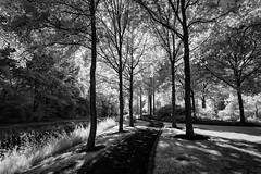 Rhododendronpark (hansekiki ) Tags: bremen horn rhododendronpark park trees baum bäume infrared infrarot canon5d