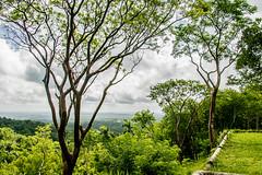 IMG_7705.jpg (BradPerkins) Tags: cuba lasterrazas biosphere coffeeplantation landscape view coffee nature