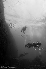 IMG_6048 (davide.clementelli) Tags: scuba underwater underwaterlife diving dive immersione portofino fishes fish pesci blackwhite bw