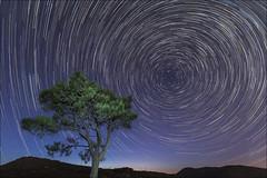 Circumpolar (Jose Cantorna) Tags: circumpolar árbol tree nocturna noche night star nikon d610