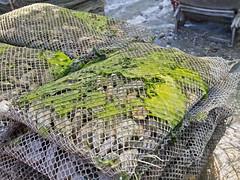 Austernfarm / Oyster farm # 1 (schreibtnix on 'n off) Tags: reisen travelling europa europe frankreich france bretagne brittany breizh cancal austernfarm oysterfarm verkostung tasting olympuse5 schreibtnix