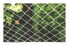 FOTOSERIE RAPPENLOCHSCHLUCHT #10 (PADDYSCHMITT.DE) Tags: rappenloch rappenlochschlucht klamm bergbach dornbirn voralberg gäntle wasser tobel wasserfälle wald natur outdoor waterfall river