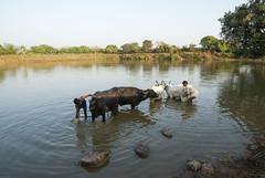 Gond village (wietsej) Tags: gond village rural tribal kawardha chhattisgarh india sonydslra100 tamronspaf1750mmf28xrdiiildaspif a100 1750