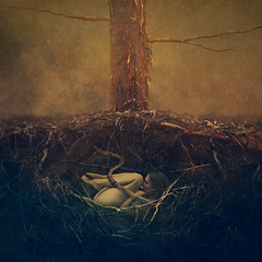sapling (brookeshaden) Tags: brookeshaden fineartphotography conceptualart darkart surrealism surrealphotography roots underground buried sapling