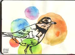 Plover (N. Lee the Adequate) Tags: drawing brushpen watercolor sketchbook bird