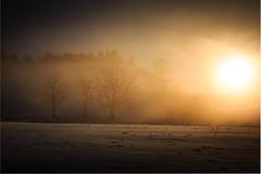Breiten Winter 3 Bäume Sunset 2 (Bugtris) Tags: breiten 2470f4l burgistein baum nebel landschaft winter sonne trees sunset schnee fog canon 5dmkiii tree snow