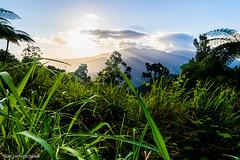 Mountain at my gates (ptch.blck) Tags: australia travel traveller davies creek sunset grass mountain photography hdr light landscape beams rainforest samsung nx3000