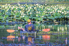 Summer! (jmhutnik) Tags: kayak summer july waterlilies greenbottomwildlifemanagementarea westvirginia lesage cap fishing oars reflection fishingpoles fisherman water lotus