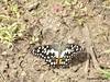 Butterfly3 (Greencraftingkid) Tags: birding butterflies naturewalk familytime himayatsagar