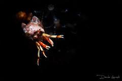Grotta del Tinetto (Lopresti Davide) Tags: underwater sub dive macro snoot nimar lerici immersioni blu