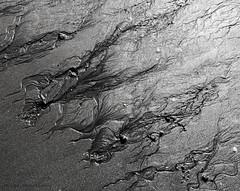 rivulets (marianna_a.) Tags: p7230258 rivulets beach pattern mariannaarmata abstract pebble path track lines organic monochrome bw blackandwhite