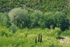 56 - Bosnie-Herzégovine, Počitelj, au bord de la Neretva (paspog) Tags: europe may mai 2017 bosnieherzégovine počitelj neretva arbres trees baüme